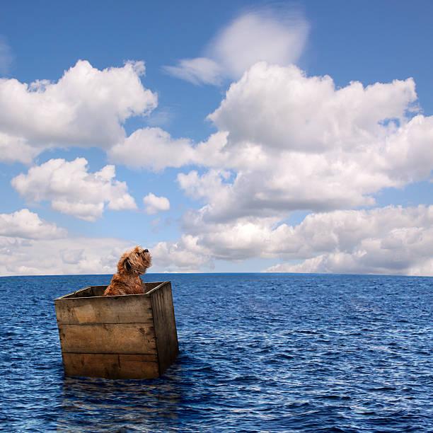 Lost dog in ocean picture id541282886?b=1&k=6&m=541282886&s=612x612&w=0&h=uase22bwrnfbgb41wzrv up5kz4y7wcrctctnrtfupg=