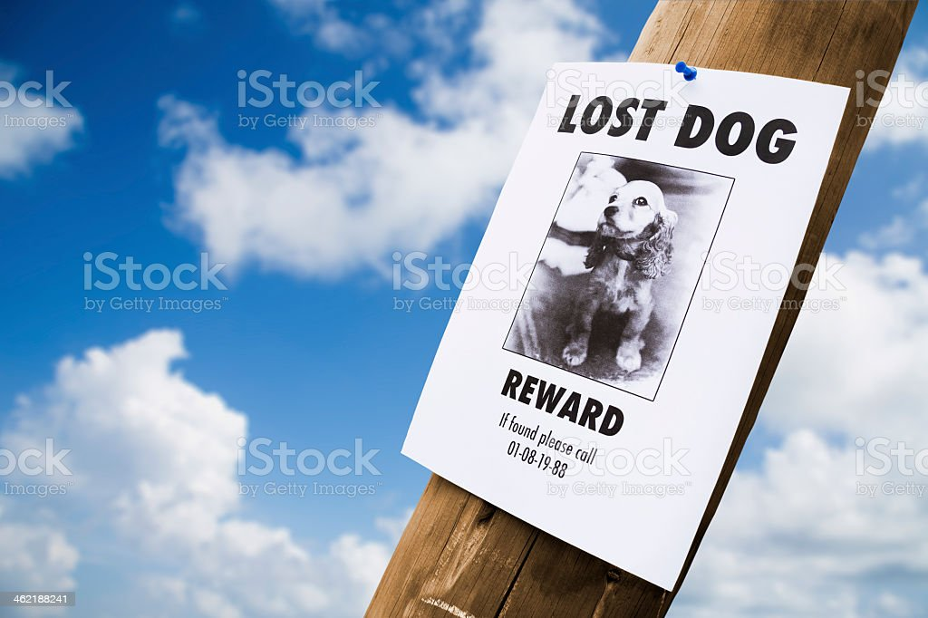 A lost dog poster nailed to a lamppost stock photo