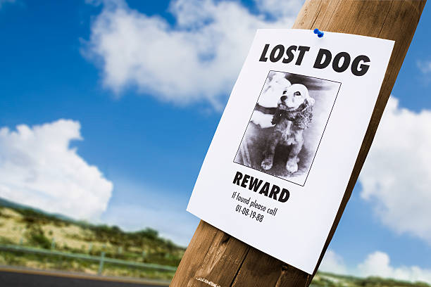 lost dog poster nailed to a lightpost - lost stock photos and pictures