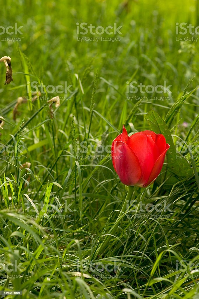 Lost flower royalty-free stock photo
