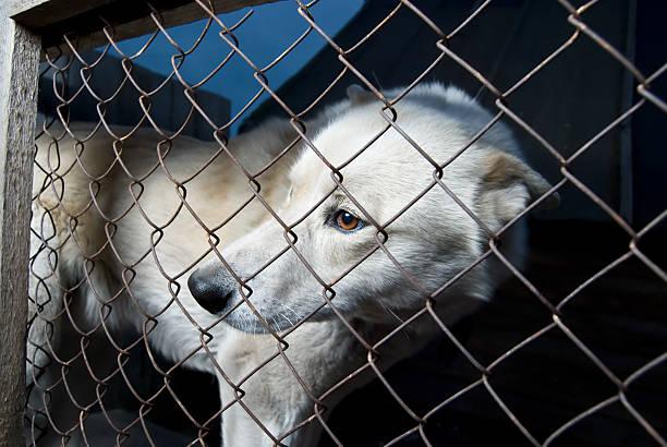 lost la liberté - cage animal nuit photos et images de collection