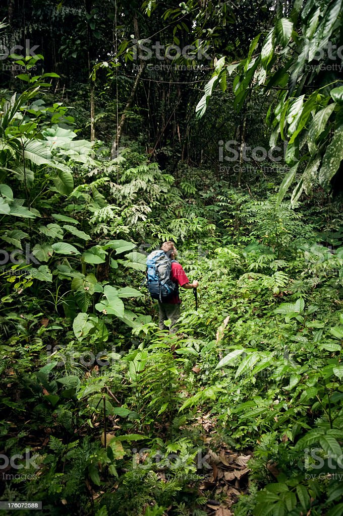 Lost in the jungle. royalty-free stock photo
