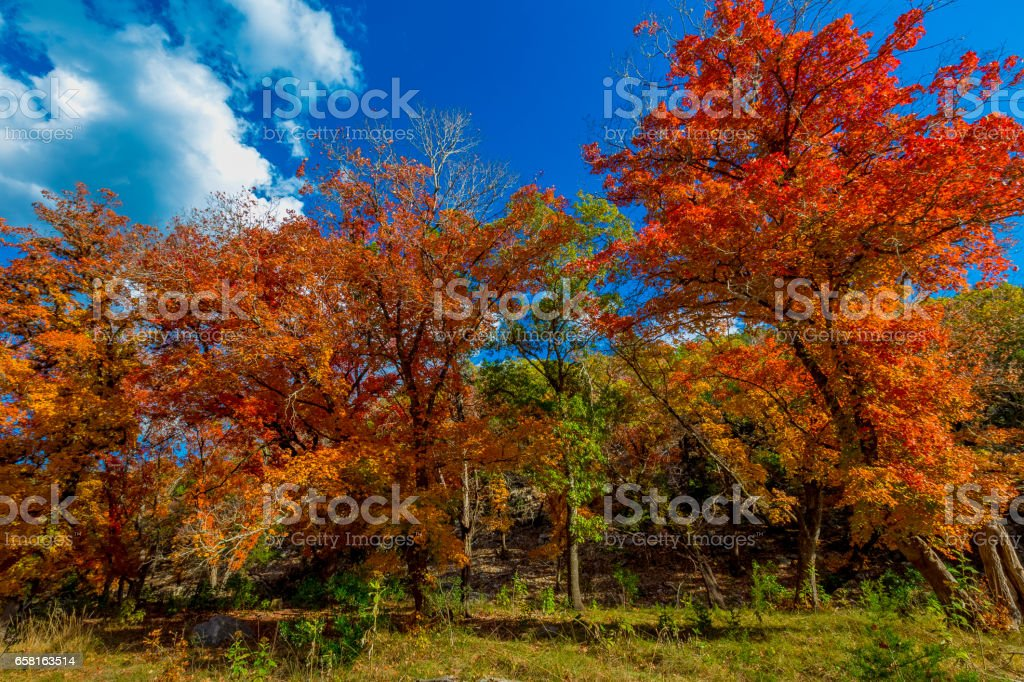Lost Maples State Park, Texas stock photo