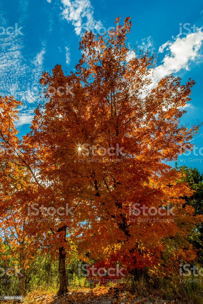 Lost Maples State Park, Texas - Royalty-free Autumn Stock Photo
