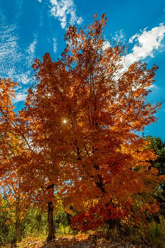 Verloren Maples State Park Stockfoto en meer beelden van Beschermd natuurgebied