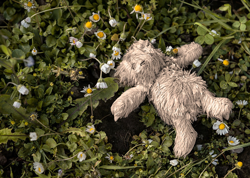 Lost or abandoned teddy bear