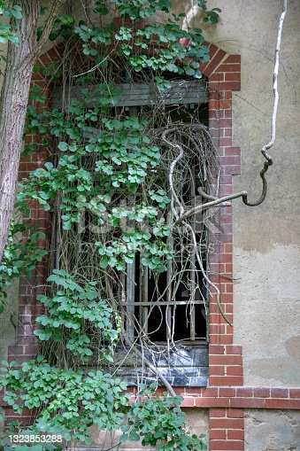 istock BEELITZ, GERMANY - JUNE 30, 2020:  A lost place in germany is the famous abandoned hospital and tuberculosis sanatorium in Beelitz near Berlin. Trees grow out of windows and roofs. 1323853288