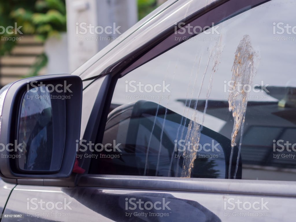 lot of bird feces droppings on front car glass, Bring germs to people, Diseases that come with birds. stock photo