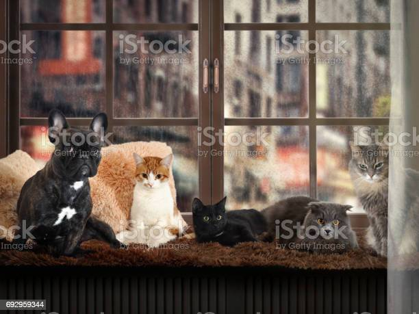Lot of cats and a dog on the windowsill outside the rain city street picture id692959344?b=1&k=6&m=692959344&s=612x612&h=mydm2k 6odhxswcoorja p7zqgwayi3ubkqfztvkr30=
