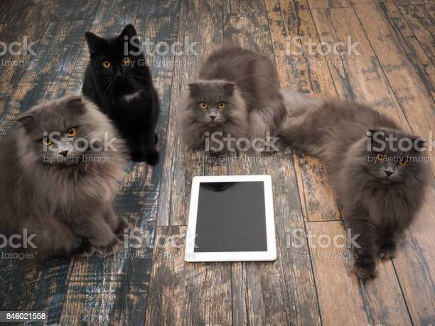 Lot of cats around tablet computer on the floor picture id846021558?b=1&k=6&m=846021558&s=612x612&h=gvzmqt140jeb290ruvmwtxlhhvyxe6fwkknqt yeni0=
