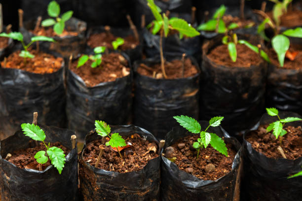 Lot of different plastic seedling bags with small plants - seeding growing stock photo