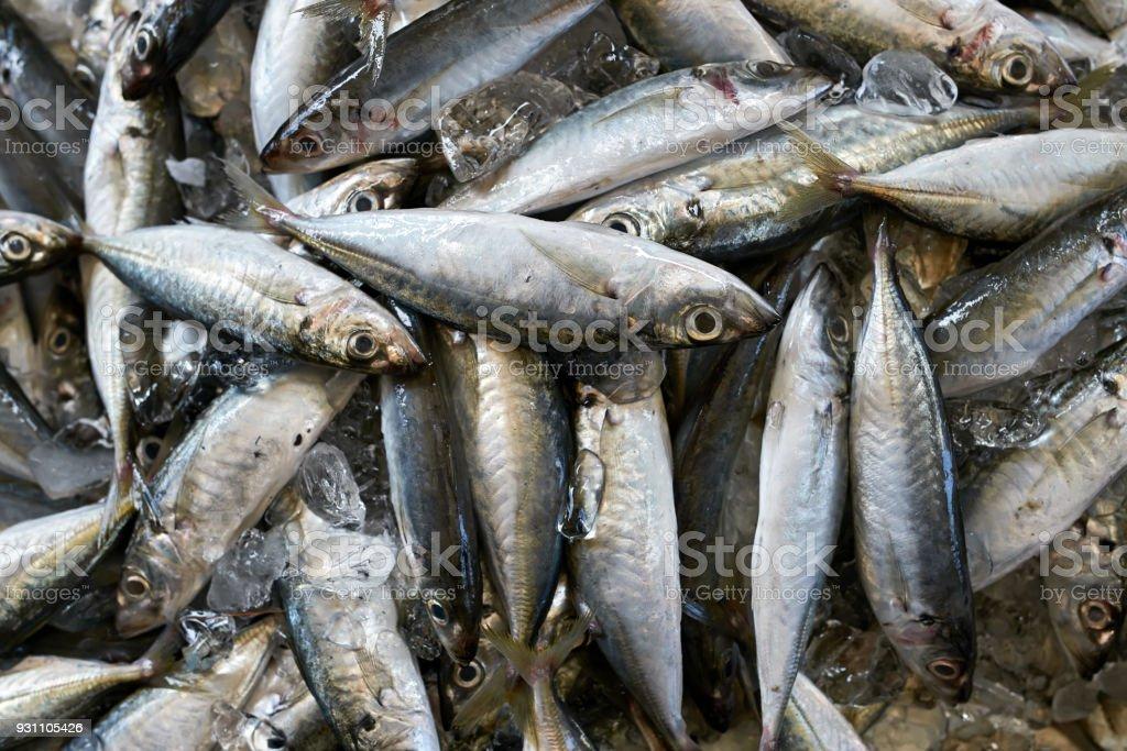 Balıklar piyasada çok - Royalty-free Balık Stok görsel