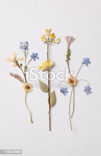 Colorful dried flowers on vintage paper