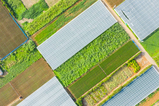 viele pflanzen sind in einem großen feld gepflanzt - flugzeugperspektive stock-fotos und bilder