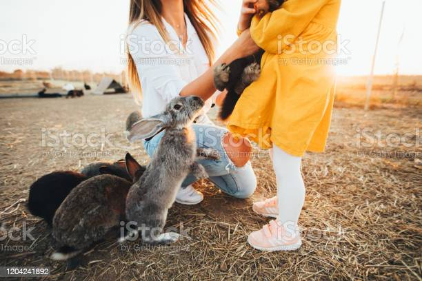 Lot of rabbits on the farm feeding rabbits in a pen easter pictures picture id1204241892?b=1&k=6&m=1204241892&s=612x612&h=lmbs0tq7ybmv61hul1roxvjtqspkskktha4kb ge8zm=