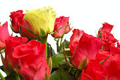 istock Lot of red and one yellow rose 95842481