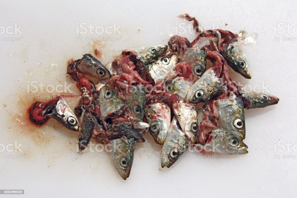 A lot of sardines head on a kitchen board stock photo