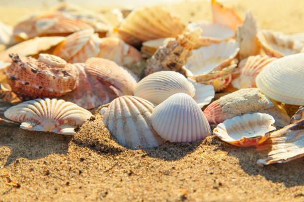 A lot of seashells on the beach sand, seashell summer background,  close up stock photo