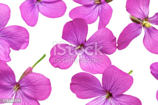 Background, plant, outdoor, green, green, close-up, creative, nature, landscape, nobody, decorative painting, beautiful flowers, buds