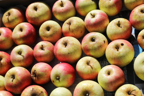 lots of apples in apple fruit box - pejft stock photos and pictures