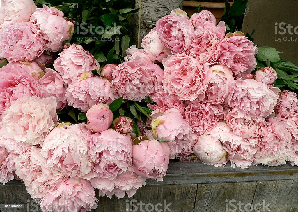 Lots of beautiful, pink peonies in flower shop stock photo