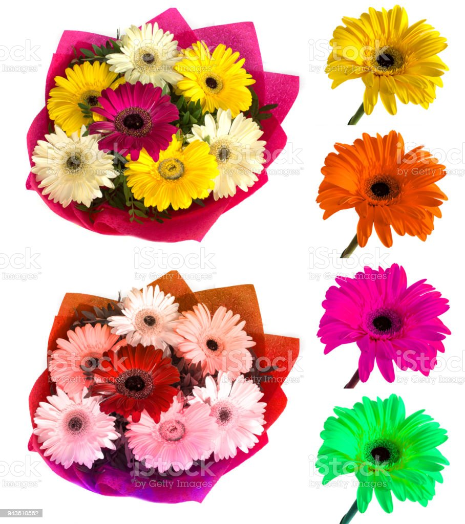 Lots of big beautiful flowers gerbera with no background gerber on lots of big beautiful flowers gerbera with no background gerber on isolated background set of izmirmasajfo