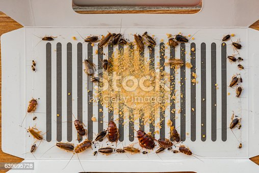 istock lots of cockroaches have been catched by the sticker 639695728