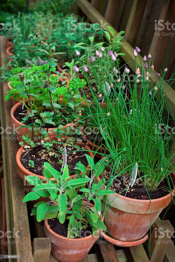 Lots of different herbs in plant pots royalty-free stock photo