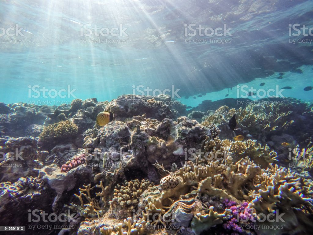Lots of fish and corals during snorkeling in Sharm el Sheikh, Egypt. stock photo