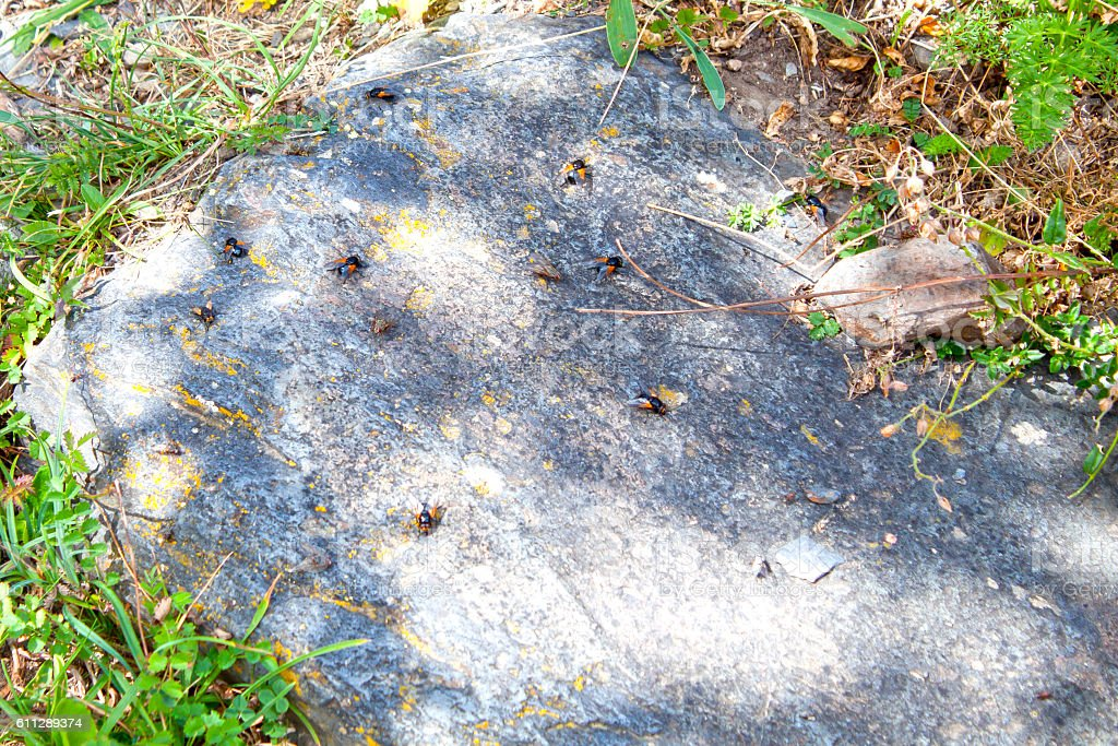 Lots of flies over a rock in the mountains stock photo