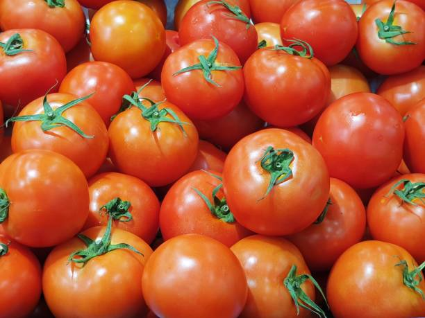 Lots of fresh and ripe tomatoes – zdjęcie