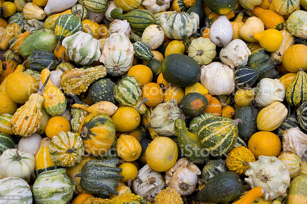 Lots of gourds stock photo