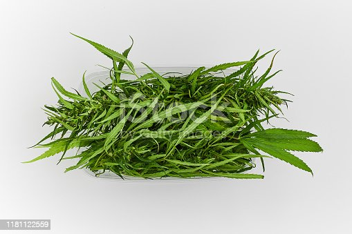 538450883istockphoto Lots of green leaves and cannabis herb marijuana in a plastic container isolated on white background. 1181122559