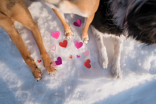 Dogs and hearts in the snow.