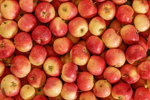 veel rode appels. natuurlijke toestand. t op te bekijken. - appel stockfoto's en -beelden