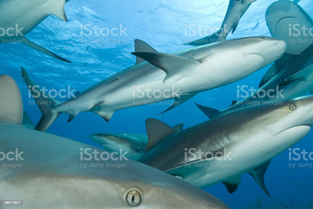 Lots of Sharks - Royalty-free Achtergrond - Thema Stockfoto