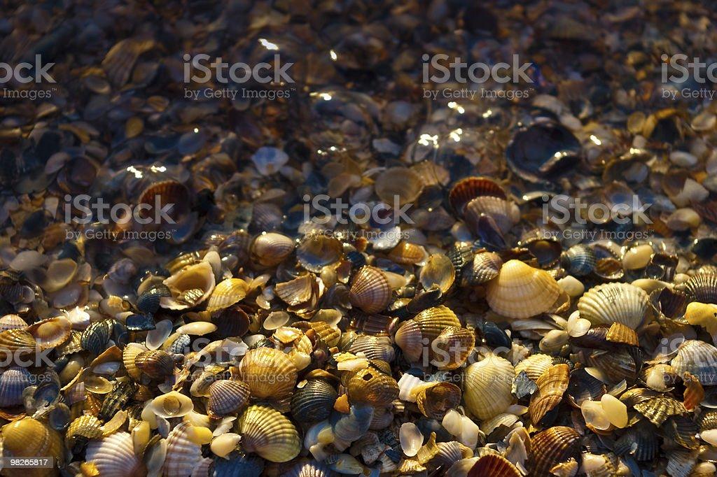 lots of shells royalty-free stock photo