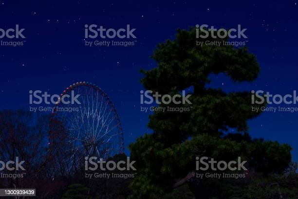 Photo of Lots of shiny stars over the Ferris Wheel and pine tree