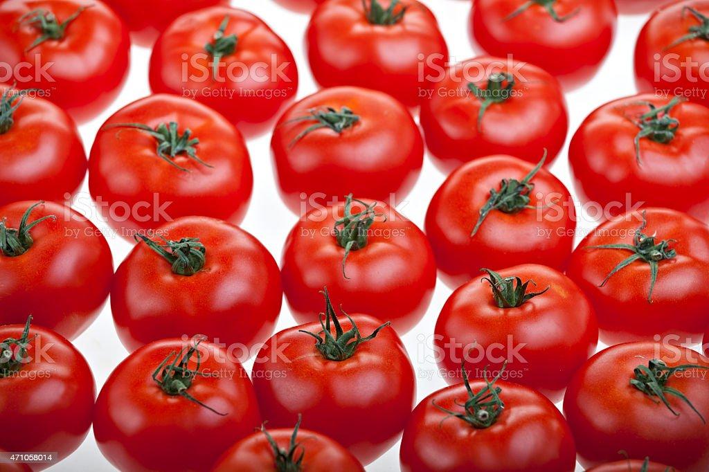 lots of tomatos stock photo