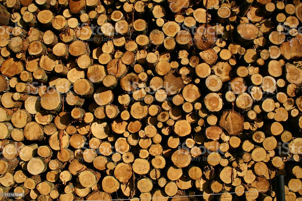 Lots of trees royalty-free stock photo
