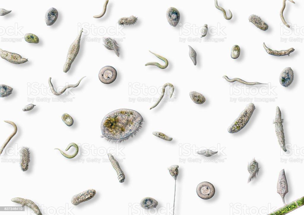 lots of various microorganisms stock photo