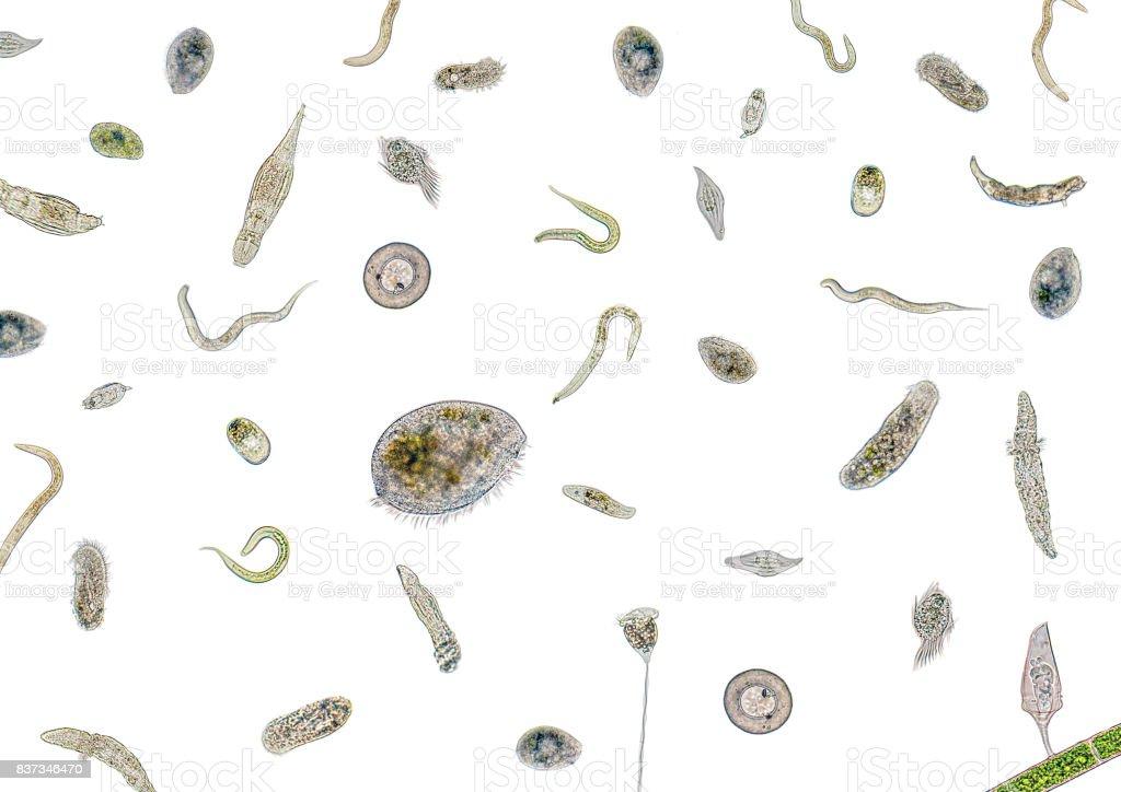 lots of various microorganisms – zdjęcie