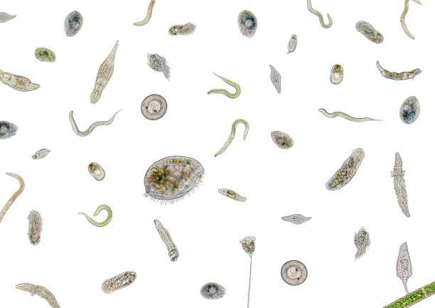 lots of various microorganisms - amiba imagens e fotografias de stock