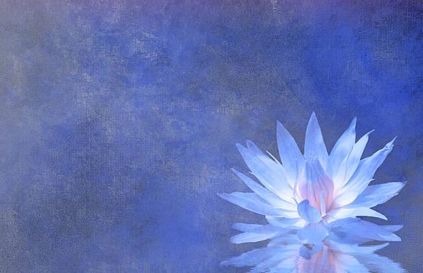 lotusblüten - gartenillustration stock-fotos und bilder
