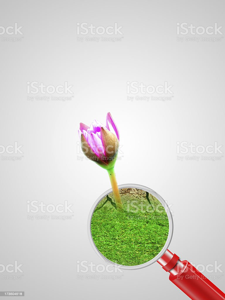lotus emerged from the magnifying glass royalty-free stock photo