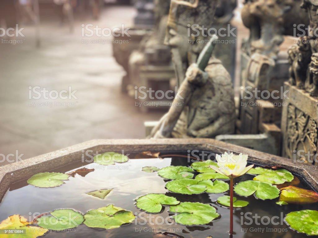 Lotus Flower Gracing Buddhist Temple Garden Stock Photo More