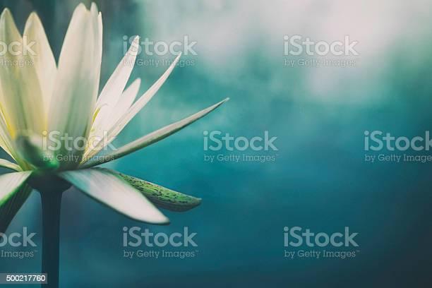 Lotus flower in bloom picture id500217760?b=1&k=6&m=500217760&s=612x612&h=xsxq8vtz1 t9jijbvwq4aovuo7rghkjtye6bhm3cipu=