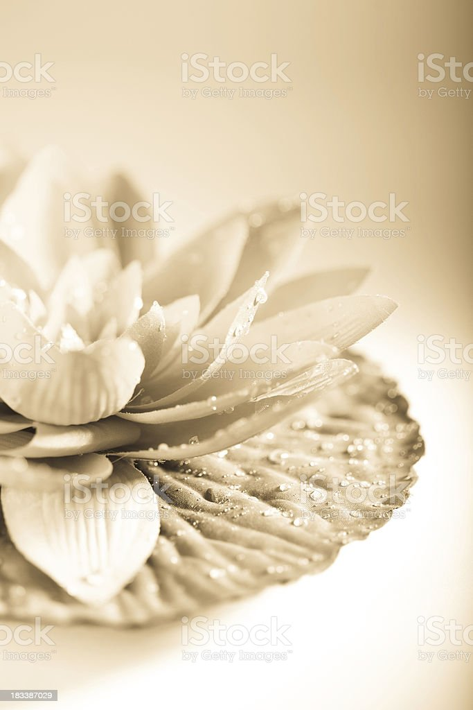 Lotus flower in sepia royalty-free stock photo