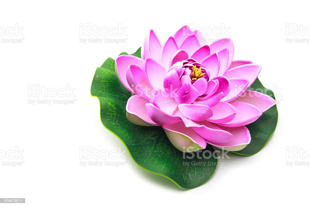 Lotus flower model stock photo