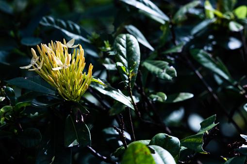 蓮花 照片檔及更多 一朵花 照片